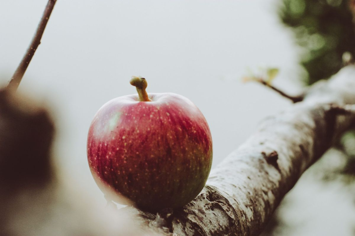 apple barbara-montavon-PnliufWF_Vg-unsplash